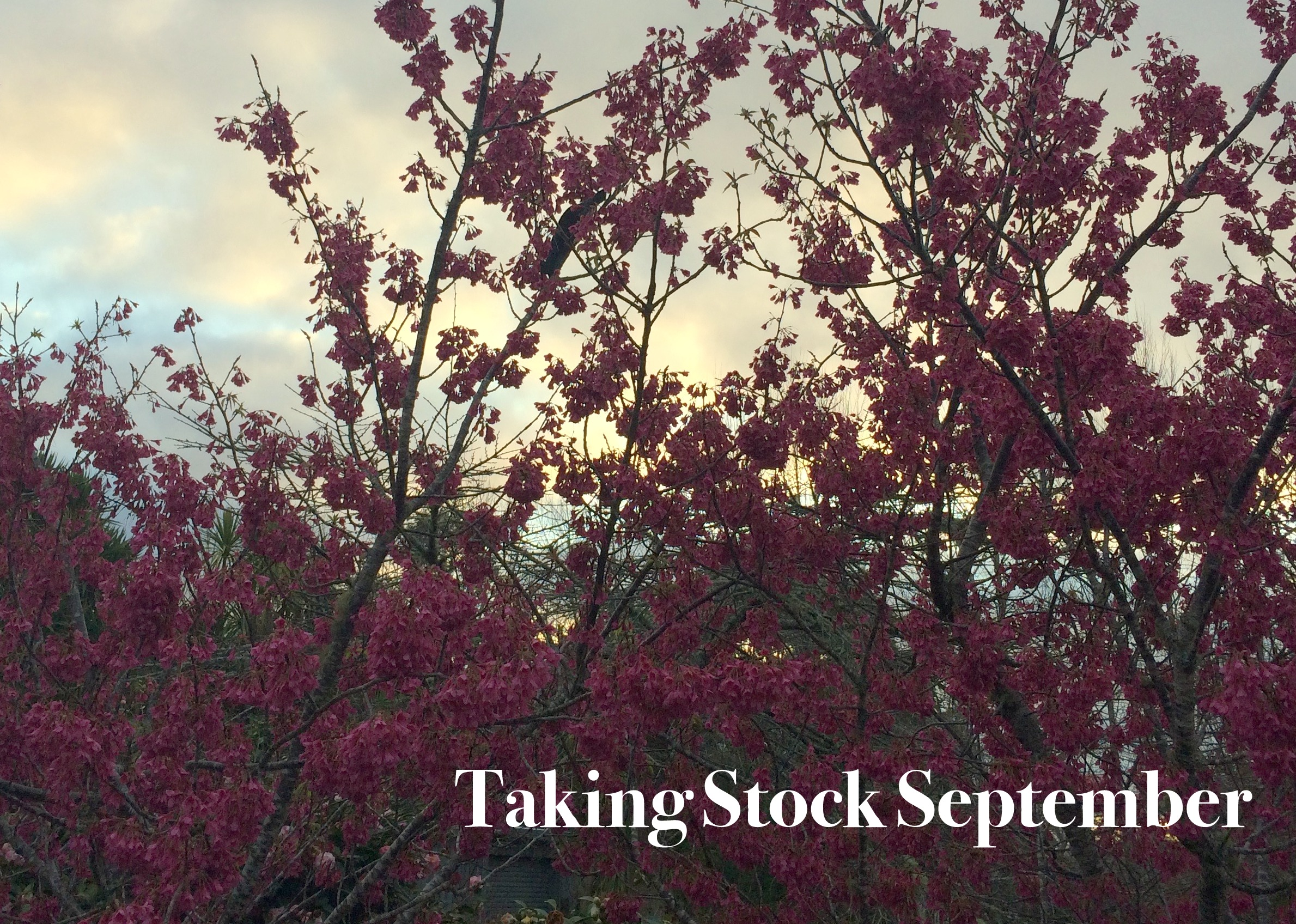 Taking Stock September myfoxycorner